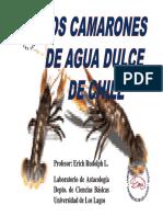 Los Camarones de Chile