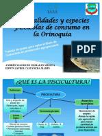 GENERALIDADES Y ESPECIES PISCICOLAS DE LA REGION ORINOQUI, ENCUENTRO 2- CONTROL.pptx