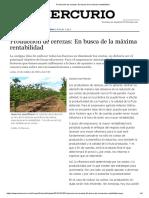 Producción de Cerezas_ en Busca de La Máxima Rentabilidad