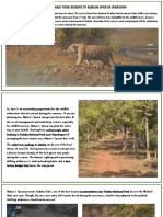 Tadoba Tiger Safari , Tadoba Full day safari booking @7719806444