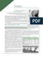 POTENCIALIDADES SEMILLAS.pdf