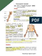 J. Brunstein - Generalidades de M.S y Cíngulo Pectoral 2014