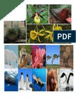 Animales en Extincion de Ica