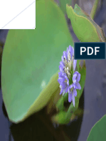Detection of fungi associated with water hyacinth Eichhornia crassipes in Iraq and their pathogenicity under controlled condition