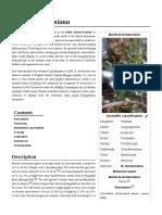 Banksia Lemanniana