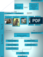 2eso-nutricinanimalesyplantas-110216090542-phpapp01.pptx