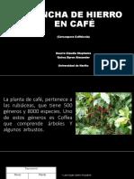 MANCHA de HIERRO en CAFÉ Microbiología Terminado