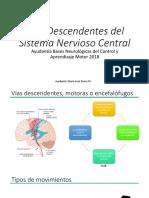 Descendentes del Sistema Nervioso Central