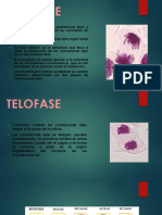 Anafase y Telofase