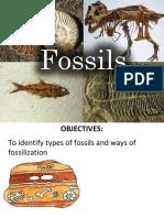 Fossil Final