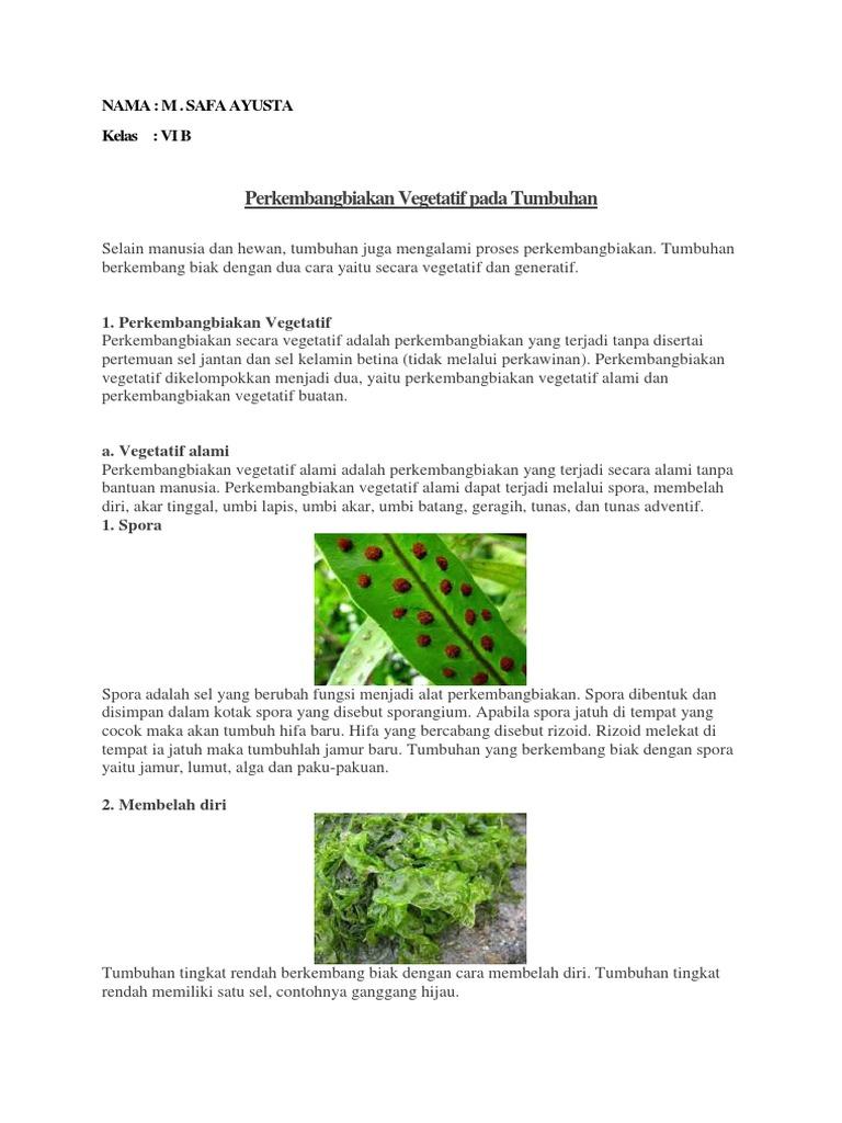 Perkembangbiakan Vegetatif Dan Generatif Pada Tumbuhan