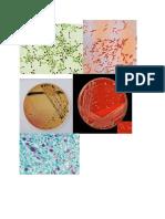 gambar mikrobiologi