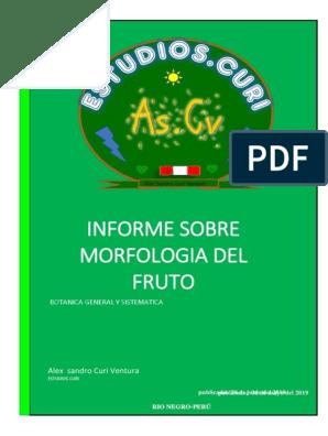 Informe Sobre Morfologia Del Fruto Frutas Técnicas