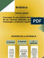 BOTANICA Conceptos