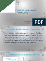 LINFOCITOS B E INMUNIDAD HUMORAL.pptx