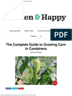 The Complete Guide to Growing Corn in Containers - Garden and Happy