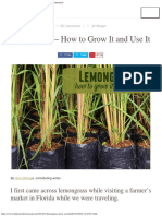 Lemongrass - How to Grow It and Use It _The Prairie Homestead