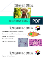 Hepatozoonosis Canina