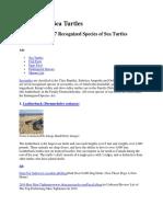 7 Species of Sea Turtles