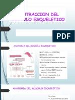 CONTRACCION DEL MÙSCULO ESQUELETICO.pptx