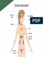 Sistema Endocrino Femenino