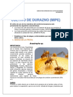 Plagas y Enfermedades - Actividad 4