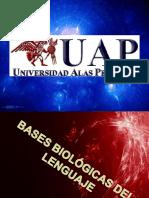 basesneurologicasdellenguaje-141126194630-conversion-gate02.pdf