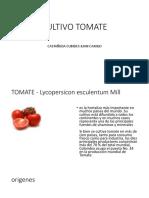 Cultivo Tomate