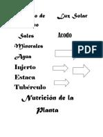 impresión plantas.docx