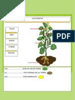 CLASE CON PLANTAS 1ª GRADO.docx