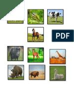 Clases de Animales