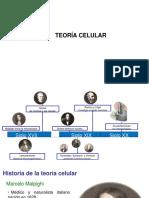06 - Teoría Celular