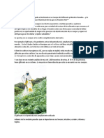 Acido Folico vs Folato