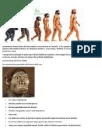 Homo Ar Caicos
