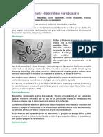 Enterobiasis - Enterobius vermicularis