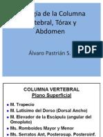 Miología de la CV, Tórax y Abdomen