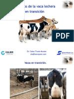 vacas en transicion