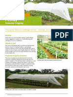 Philippines Factsheet Pechay Protected Cropping