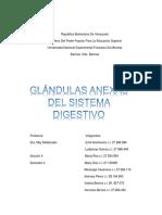 Glándulas anexas del sistema digestivo.docx
