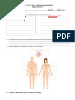 Evaluación Final Sistema Endocrino2