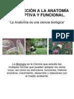 Introduccion Anatomia PORTEÑO