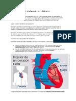 Sistema curculatorio