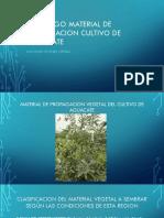 Material de Propagacion Vegetal