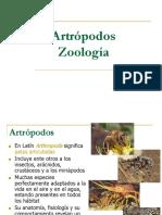 artropodos_clase.pdf