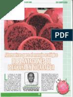 Alternativas Para El Manejo Ecologico de Plantaciones de Pitahaya en Nicaragua