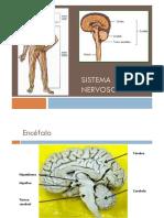9ano Sistema Nervoso Ppt.pptx