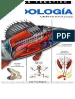 OJO FULL ZOOLOGIA-vertebrados.pdf