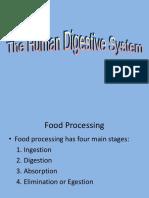 13 Digestion