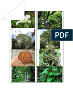 Amazonia.pdf