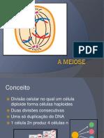 slides sobre meiose